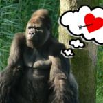 Tinder para gorilas