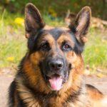 EUA: cachorro com covid-19 é  sacrificado