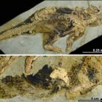 China descobre o primeiro ânus preservado de dinosauro