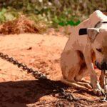 CLDF aprovou lei que proíbe acorrentar animais