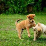Comportamento canino: entenda porque as fêmeas montam outras fêmeas