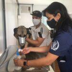 Hospital veterinário faz aniversário e dobra atendimentos