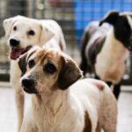 DF: castração gratuita de 1,8 mil cães e gatos por mês